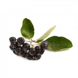 Il frutto di aronia un concentrato di vitamine