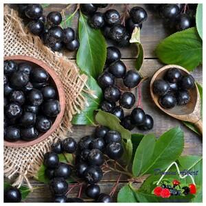 Conosci l'Aronia? Le bacche di Aronia sono piccoli frutti che crescono in cespugli o piccoli arbusti. Sono simili ai mirtilli ma il loro sapore è molto più aspro. Hanno un elevato contenuto di vitamine, sali minerali ed antiossidanti che aiutano a proteggere e rinforzare l'organismo.  Prova il nostro preparato di pera e aronia 👉🏻 https://bit.ly/3ayS57M  📞 329.4195850 📧 domini@agricoladomini.it 📍 Frazione Lateis, 19 - 33020 Sauris (UD)